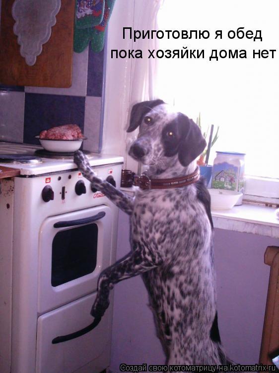 Котоматрица: Приготовлю я обед  пока хозяйки дома нет