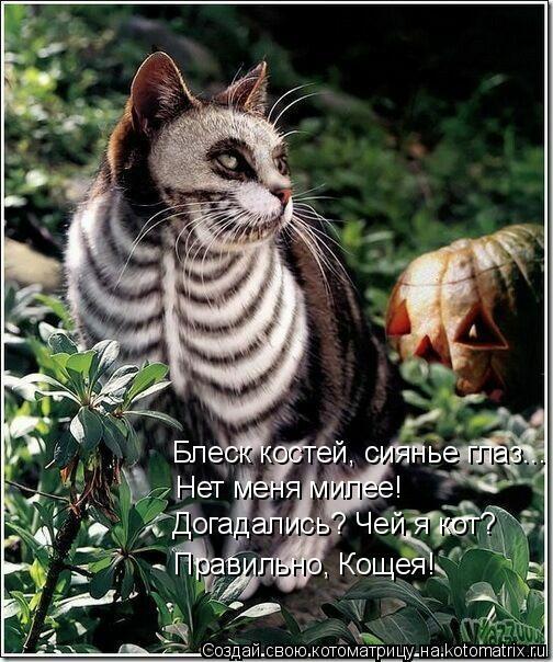 Котоматрица: Блеск костей, сиянье глаз... Нет меня милее! Догадались? Чей я кот? Правильно, Кощея!
