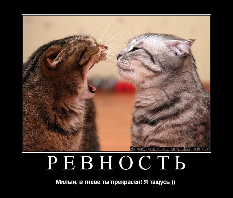 ловля как побовоть чувство вины когда отдаешь кота самых первых версий