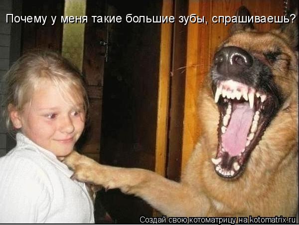 Котоматрица: Почему у меня такие большие зубы, спрашиваешь?