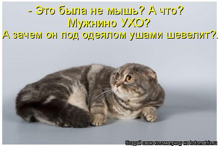 Котоматрица: - Это была не мышь? А что? Мужнино УХО? А зачем он под одеялом ушами шевелит?..
