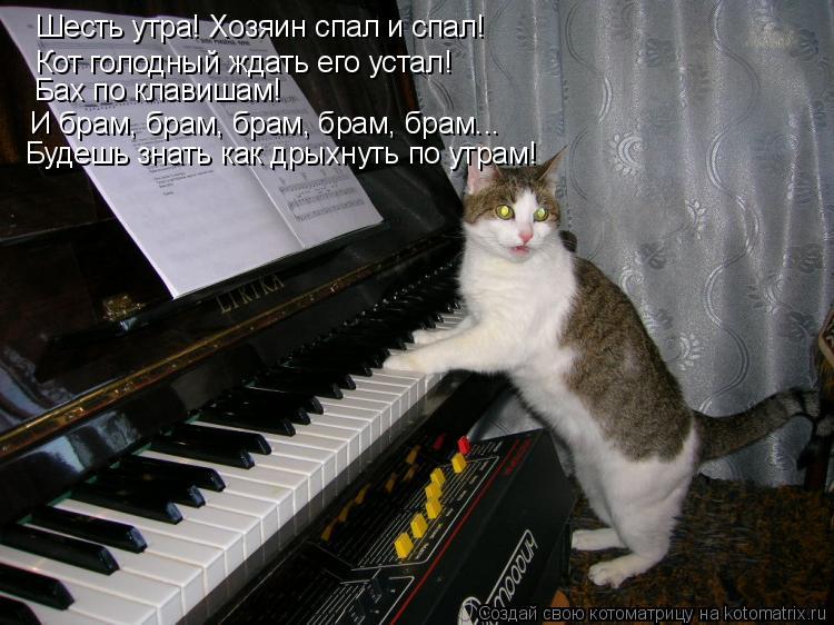 Котоматрица: Шесть утра! Хозяин спал и спал! Кот голодный ждать его устал! Бах по клавишам!  И брам, брам, брам, брам, брам... Будешь знать как дрыхнуть по утр