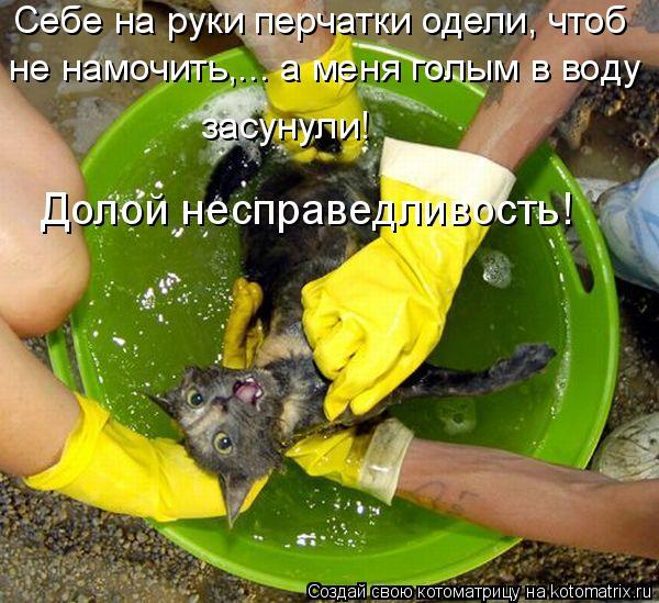 Котоматрица: Себе на руки перчатки одели, чтоб   не намочить,... а меня голым в воду  засунули! Долой несправедливость!