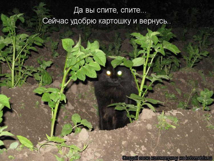 Котоматрица: Да вы спите, спите... Сейчас удобрю картошку и вернусь..