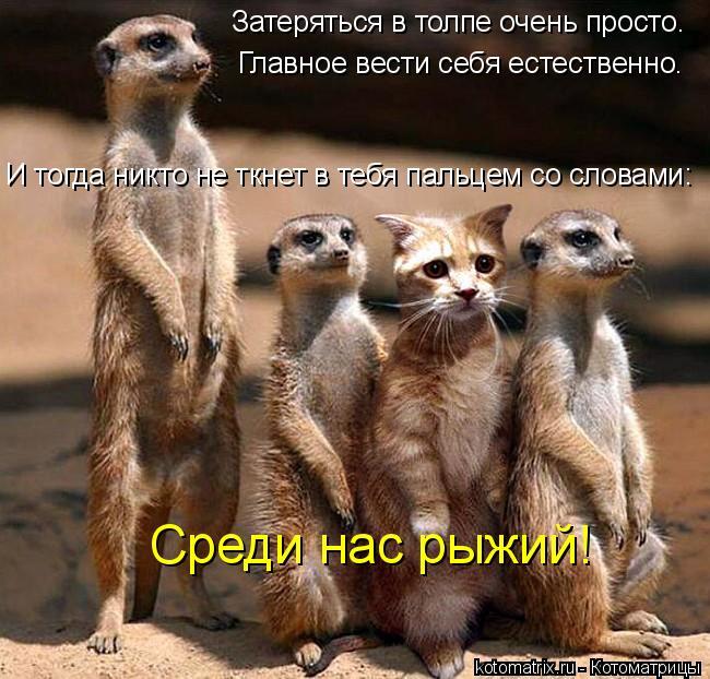 Котоматрица: Затеряться в толпе очень просто.  Главное вести себя естественно.  И тогда никто не ткнет в тебя пальцем со словами:  Среди нас рыжий!