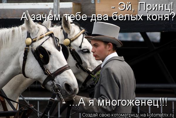 Котоматрица: - Эй, Принц! А зачем тебе два белых коня? - ...А я многоженец!!!