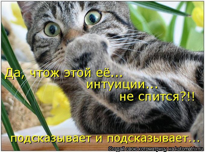 Котоматрица: Да, чтож этой её...  интуиции... не спится?!! подсказывает и подсказывает...