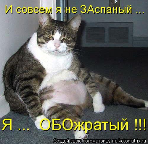 Котоматрица: И совсем я не ЗАспаный ... Я ...  ОБОжратый !!!