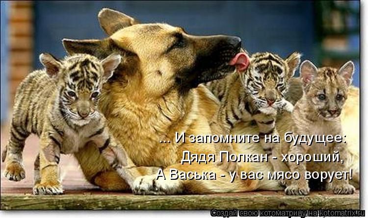 Котоматрица: Дядя Полкан - хороший, А Васька - у вас мясо ворует! ... И запомните на будущее: