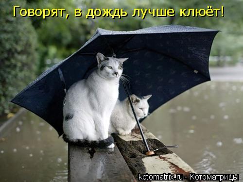 Котоматрица: Говорят, в дождь лучше клюёт!