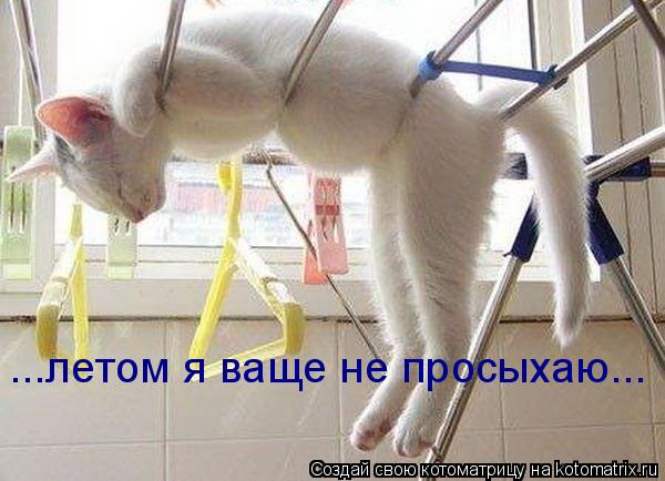 Котоматрица: ...летом я ваще не просыхаю...