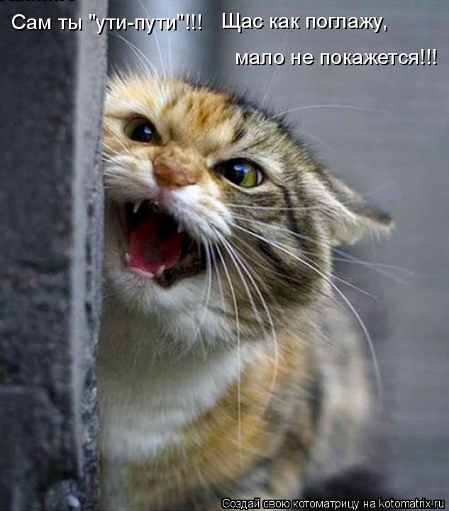 """Котоматрица: Сам ты """"ути-пути""""!!!  Щас как поглажу, мало не покажется!!!"""