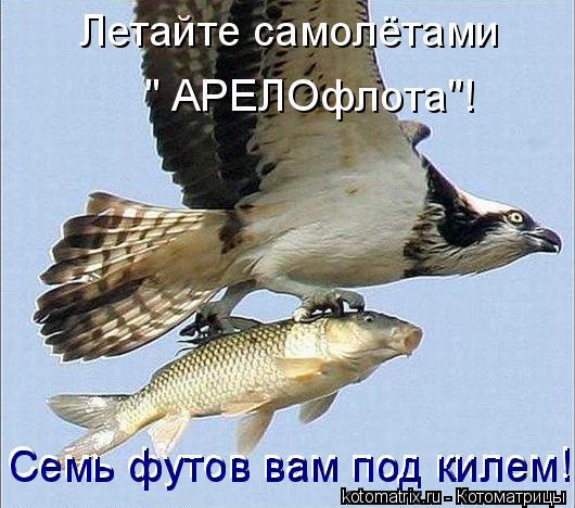"""Котоматрица: Летайте самолётами  """" АРЕЛОфлота""""! Семь футов вам под килем! Семь футов вам под килем!"""