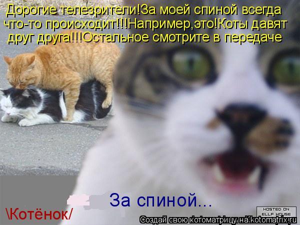 Котоматрица: Дорогие телезрители!За моей спиной всегда что-то происходит!!!Например,это!Коты давят друг друга!!!Остальное смотрите в передаче За спиной...