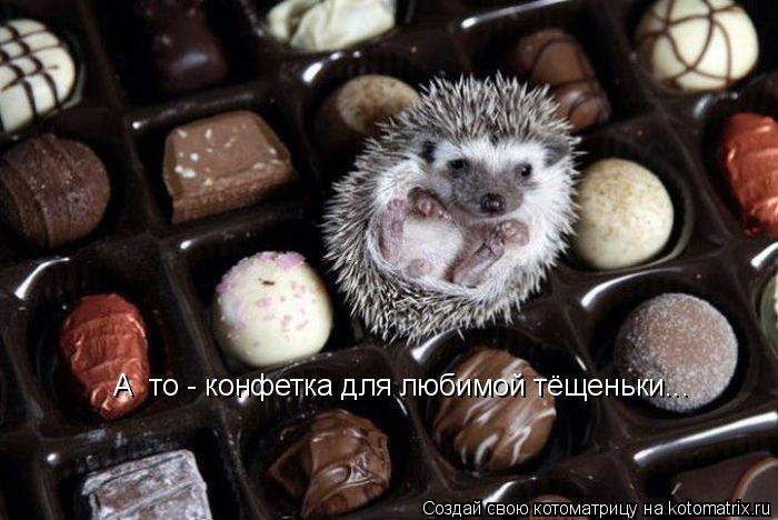 Котоматрица: А єто - конфетка для любимой тёщеньки...