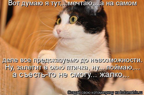 Котоматрица: Вот думаю я тут,...мечтаю,...а на самом  а съесть-то не смогу... жалко...  Ну, залетит в окно птичка, ну... поймаю,... деле все предсказуемо до невозм