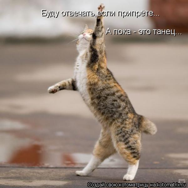 Котоматрица: Буду отвечать,если припрёте... А пока - это танец...