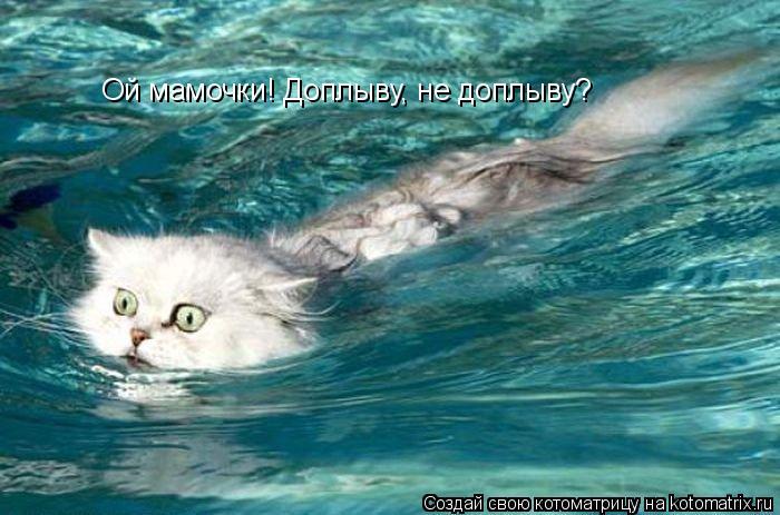 Котоматрица: Ой мамочки! Доплыву, не доплыву?