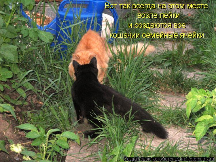 Котоматрица: Вот так всегда на этом месте возле лейки и создаются все кошачии семейные ячейки.