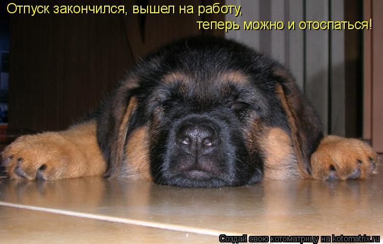 Котоматрица: Отпуск закончился, вышел на работу, теперь можно и отоспаться!