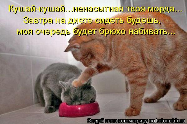 Котоматрица: Кушай-кушай...ненасытная твоя морда... Завтра на диете сидеть будешь,  моя очередь будет брюхо набивать...