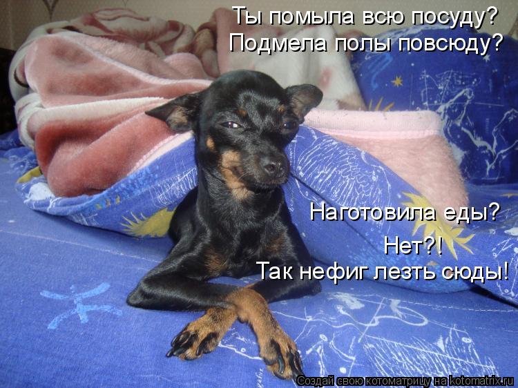 Котоматриця!)))) - Страница 4 623976
