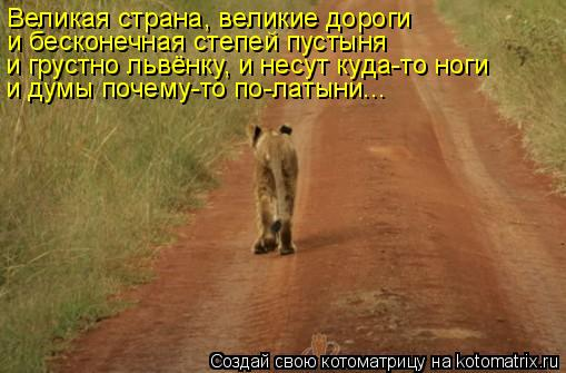 Котоматрица: Великая страна, великие дороги и бесконечная степей пустыня и грустно львёнку, и несут куда-то ноги и думы почему-то по-латыни...