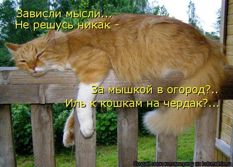 Котоматрица: Зависли мысли... Не решусь никак - За мышкой в огород?.. Иль к кошкам на чердак?...