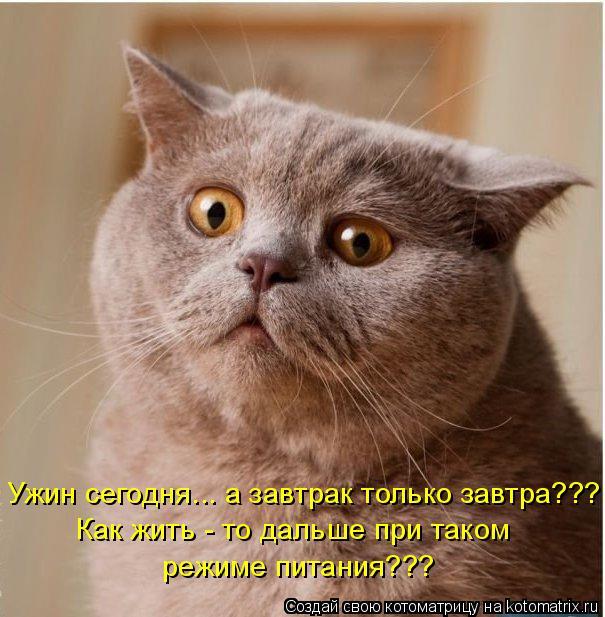 Котоматрица: Ужин сегодня... а завтрак только завтра??? Как жить - то дальше при таком  режиме питания???
