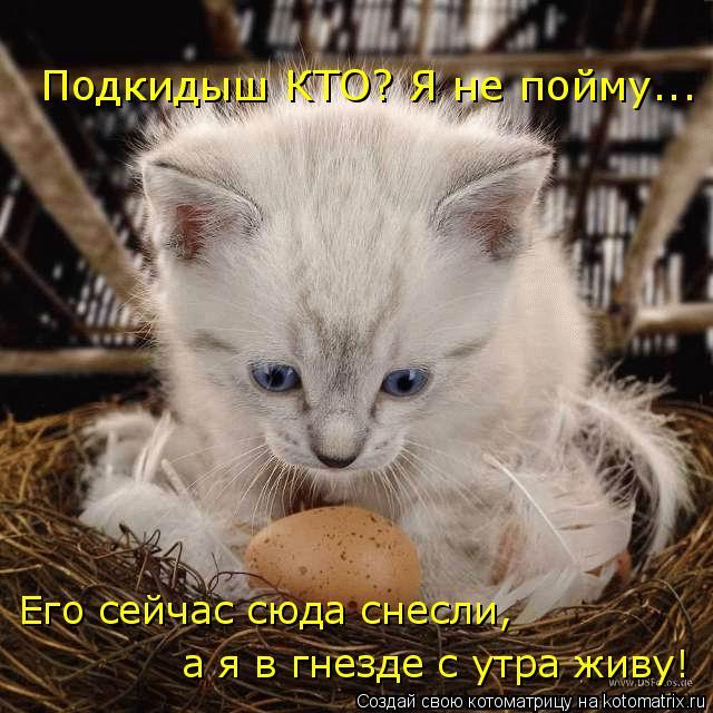 Котоматрица: Подкидыш КТО? Я не пойму... Его сейчас сюда снесли, а я в гнезде с утра живу!