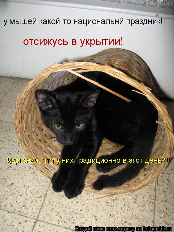 Котоматрица: отсижусь в укрытии!  у мышей какой-то национальнй праздник!! Иди знай, что у них традиционно в этот день?!!