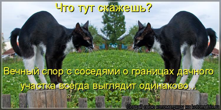 Котоматрица: Что тут скажешь?  Вечный спор с соседями о границах дачного  участка всегда выглядит одинаково...