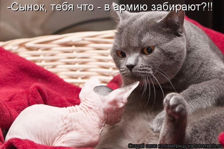 Котоматриця!)))) - Страница 4 624671