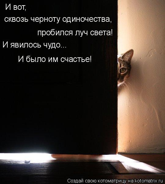 Котоматрица - И вот, сквозь черноту одиночества, пробился луч света! И явилось чудо.