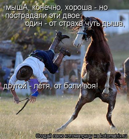 Котоматрица: мышА, конечно, хороша - но пострадали эти двое: один - от страха чуть дыша, другой - летя, от боли воя!