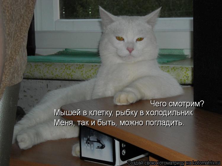 Котоматрица: Чего смотрим? Мышей в клетку, рыбку в холодильник Меня, так и быть, можно погладить.