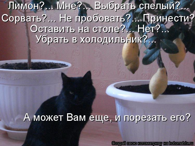 Котоматрица: Лимон?... Мне?... Выбрать спелый?...  Сорвать?... Не пробовать?... Принести?...  Оставить на столе?... Нет?...  Убрать в холодильник?...   А может Вам