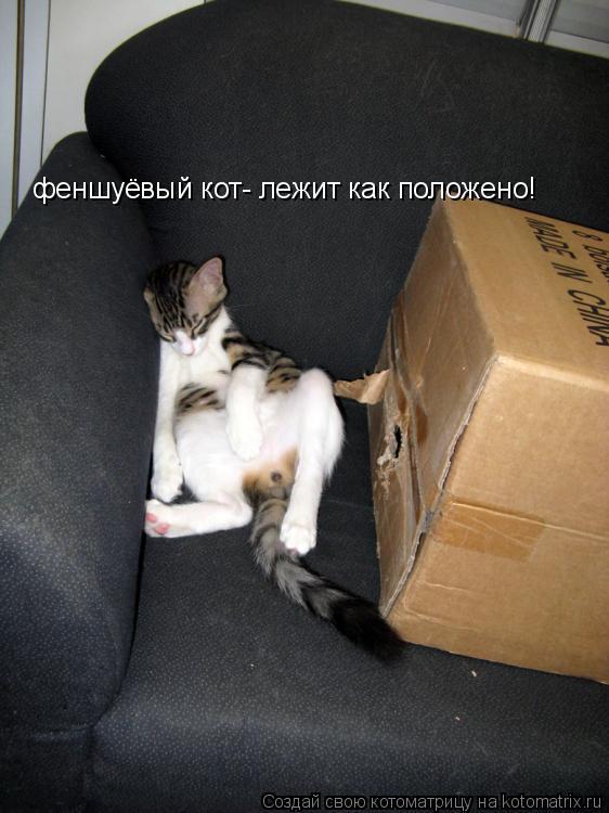 Котоматрица: феншуёвый кот- лежит как положено!