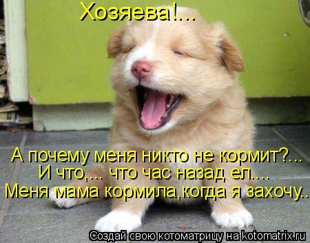 Котоматрица: Хозяева!... Меня мама кормила,когда я захочу... И что,….. что час назад ел.... А почему меня никто не кормит?...