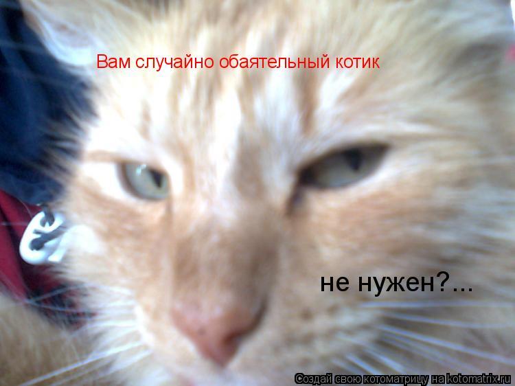 Котоматрица: Вам случайно обаятельный котик не нужен?...