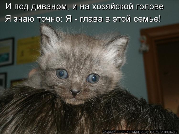 Котоматрица: И под диваном, и на хозяйской голове Я знаю точно: Я - глава в этой семье!