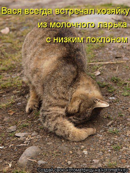 Котоматрица: Вася всегда встречал хозяйку из молочного ларька с низким поклоном