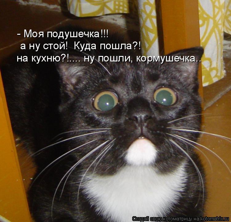 Котоматрица: - Моя подушечка!!! а ну стой!  Куда пошла?! на кухню?!.... ну пошли, кормушечка..