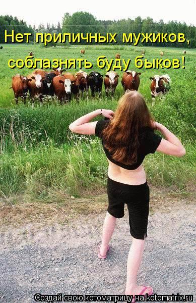 Котоматрица: Нет приличных мужиков, соблазнять буду быков!
