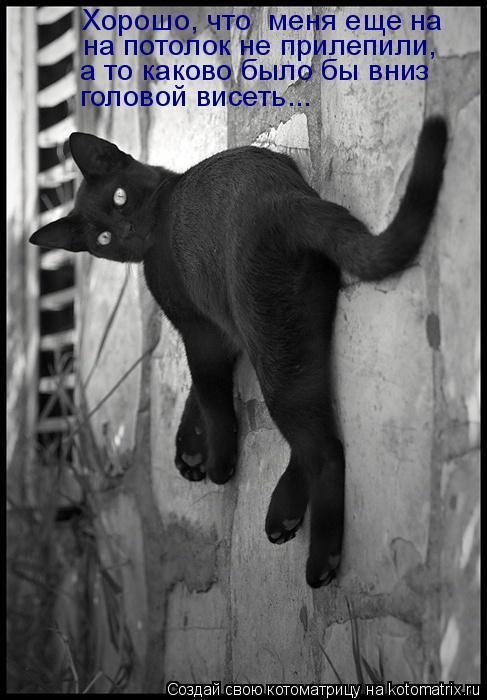 Котоматрица: Хорошо, что  меня еще на на потолок не прилепили, а то каково было бы вниз головой висеть...
