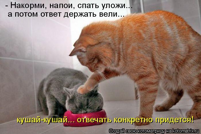 Котоматрица: - Накорми, напои, спать уложи... а потом ответ держать вели... кушай-кушай... отвечать конкретно придется!