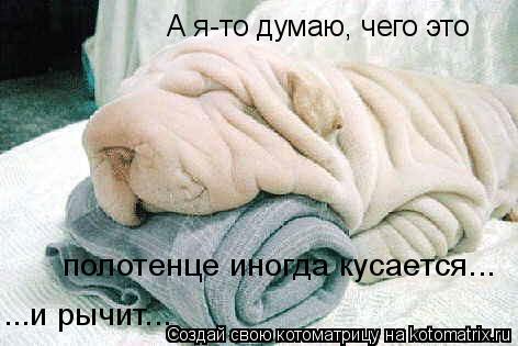 Котоматрица: А я-то думаю, чего это  полотенце иногда кусается... ...и рычит...