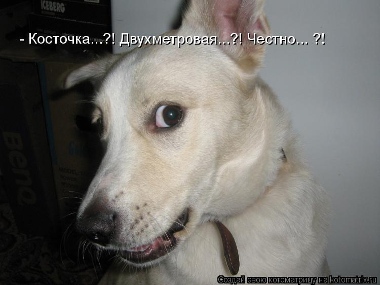 Котоматриця!)))) - Страница 3 627343