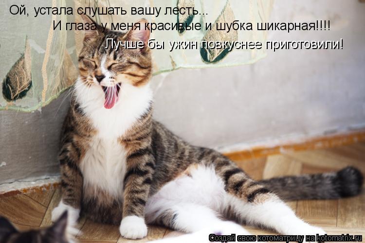 Котоматрица: Ой, устала слушать вашу лесть... И глаза у меня красивые и шубка шикарная!!!! Лучше бы ужин повкуснее приготовили!