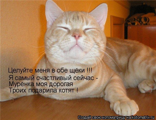 Котоматрица: Целуйте меня в обе щёки !!! Я самый счастливый сейчас -  Мурёнка моя дорогая Троих подарила котят !